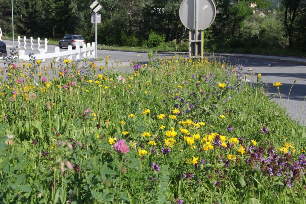 Gewachsener Blumenrasen