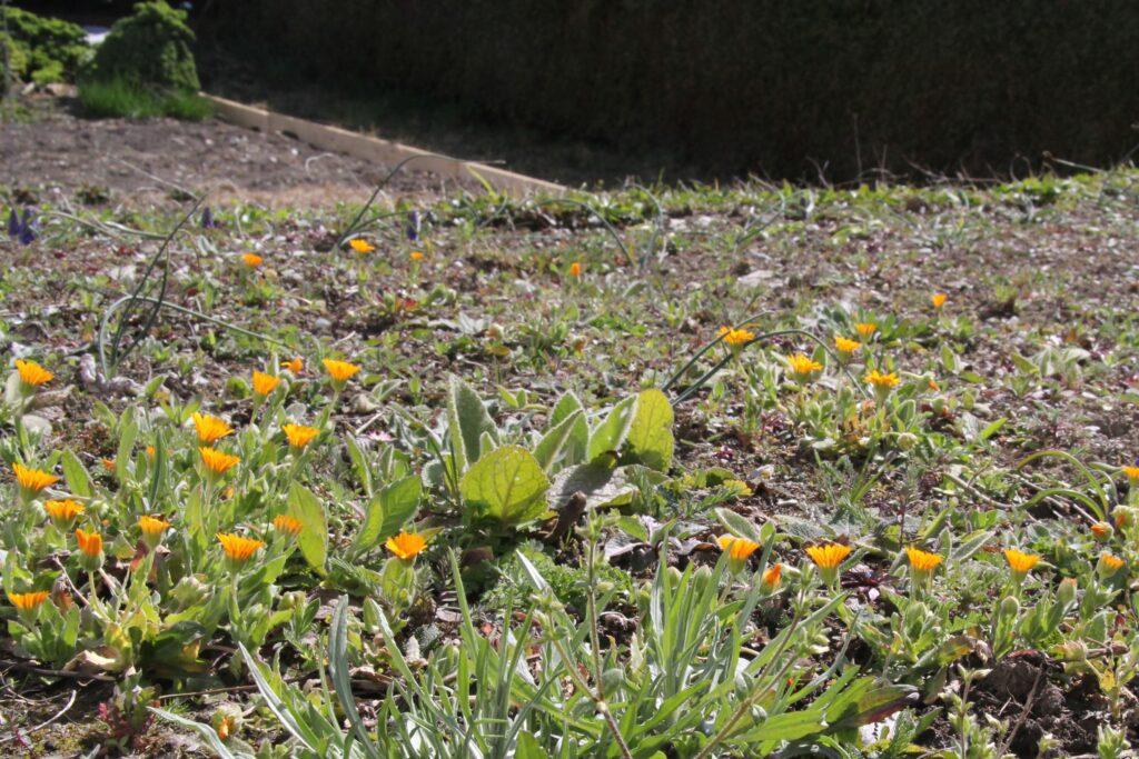 Blumenwiese nach der Ansaat