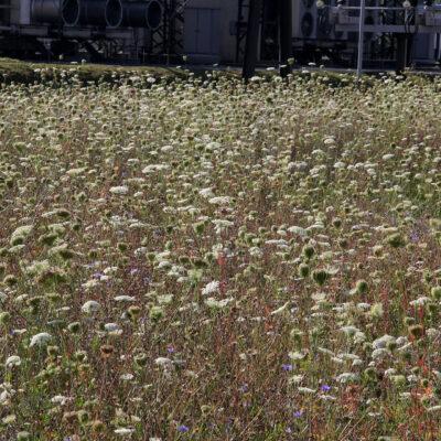 Blumenwiese im Umspannwerk Thaur