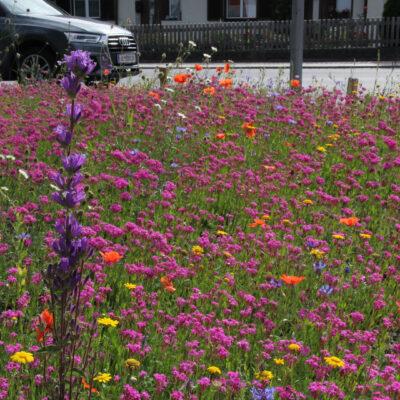 Blumenwiese in der Gemeinde Wattens