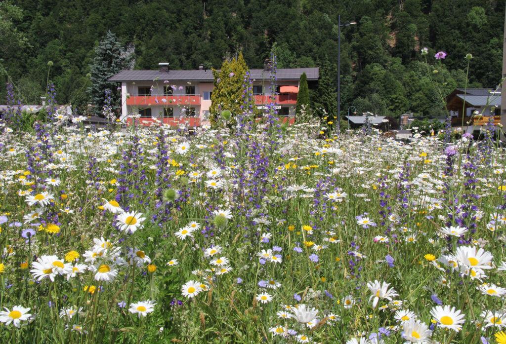 Blumenwiese in einer Gemeinde